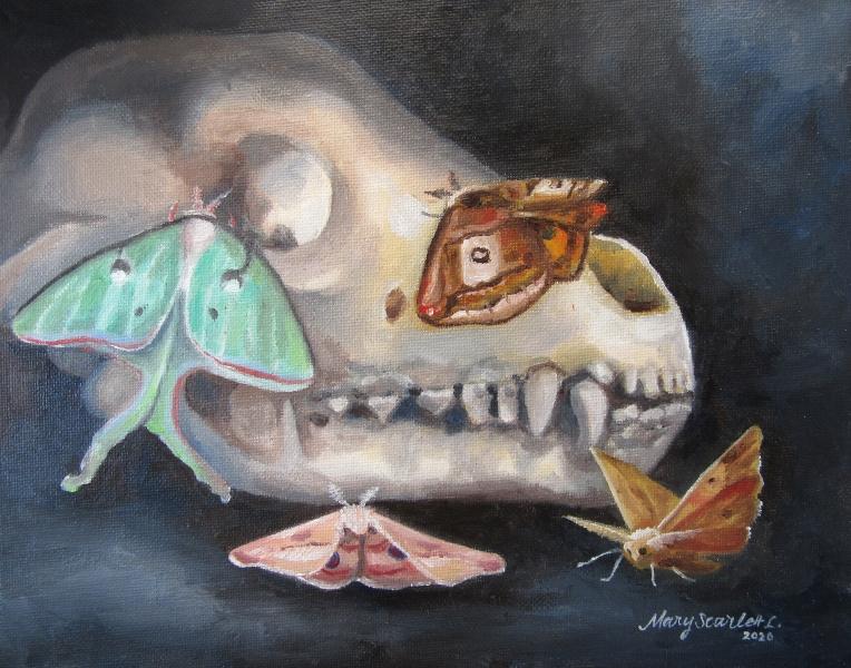moth skull moth painting